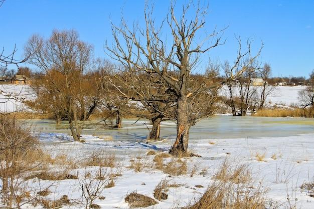 Зимний луг с замороженной водой и деревьями. сельский пейзаж