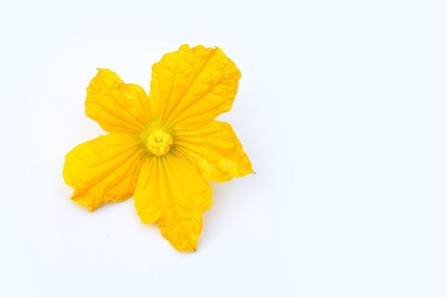 白い壁に冬のメロンの花。