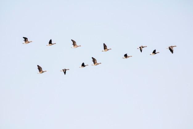 冬の渡り鳥