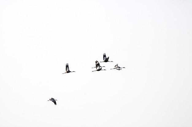 Зимние перелетные птицы