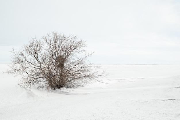 나뭇잎이 없는 외로운 덤불과 눈 덮인 들판이 있는 겨울의 미니멀한 풍경은 공간을 복사합니다. 자연 겨울 배경으로 사용할 수 있습니다.