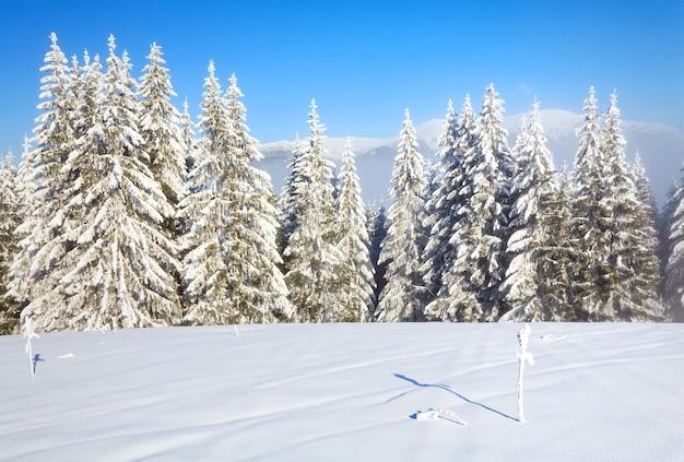 수빙과 눈 덮인 가문비나무가 있는 겨울 안개 낀 산 풍경