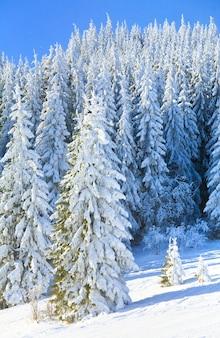 Зимний туманный горный пейзаж с инеем и заснеженными елями