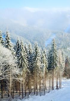 Зимний туманный горный пейзаж с заснеженными елями
