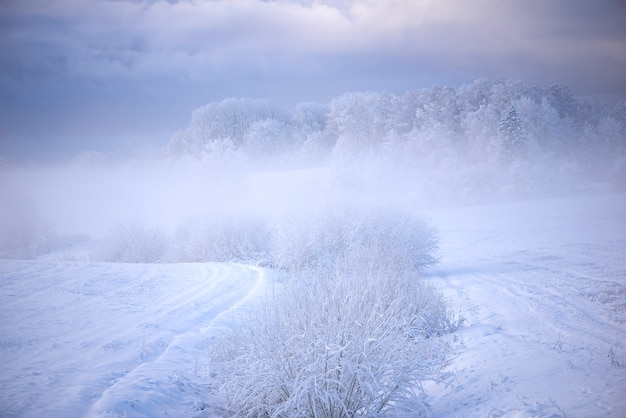 Winter morning landscape in krimulda,latvia