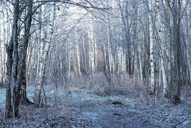 Winter morning landscape with frozen forest covered with rime Premium Photo