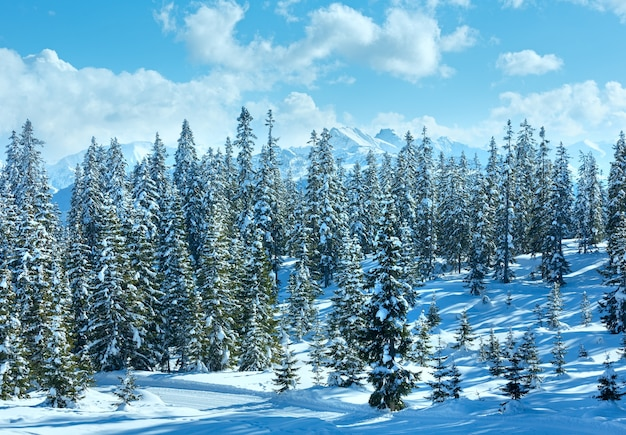 Зимний горный еловый лес заснеженный пейзаж вершине папагено-бан-фильцмос, австрия