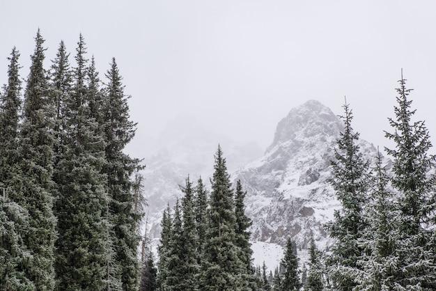 松の木と冬の山の風景