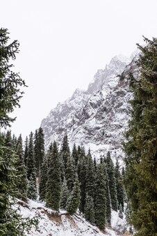 Зимний горный пейзаж с соснами