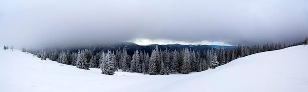 눈 덮인 소나무와 낮은 구름이 있는 겨울 산 풍경