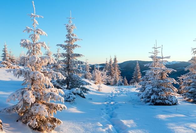Зимний горный пейзаж с заснеженными деревьями в первых утренних лучах.