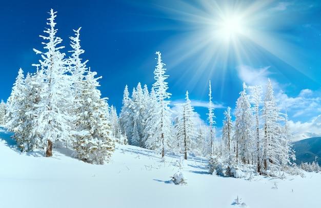 Зимняя горная панорама с еловым лесом на склоне горы (карпаты, украина).