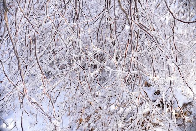 氷で覆われた白樺の木の凍った枝と冬の自然の背景