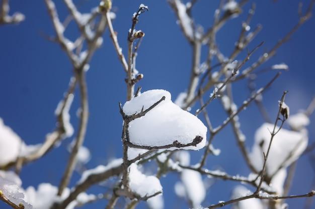 東ヨーロッパの田舎の冬の自然の詳細。寒い晴れた日には雪に覆われた木の枝。