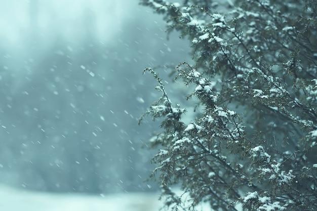 Детали зимней природы в сельской местности. колючие ветки можжевельника в снегу