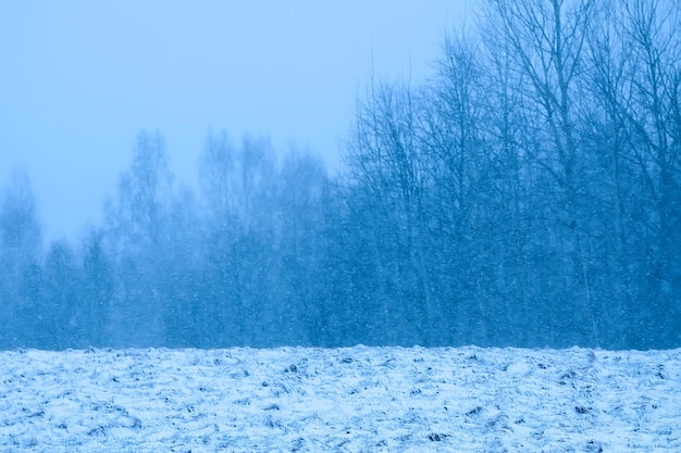 Детали зимней природы в сельской местности.