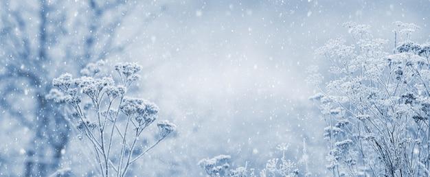 Зимний новогодний и рождественский фон с замороженными растениями во время снегопада
