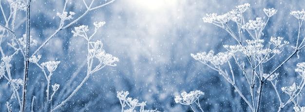 降雪時の霜に覆われた植物と冬の新年とクリスマスの背景