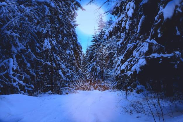 雪景色自然の冬の夜の森