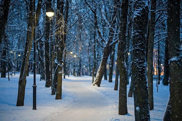 Зимний ночной пейзаж, тропинка под зимними деревьями и сияющие уличные фонари с падающими снежинками