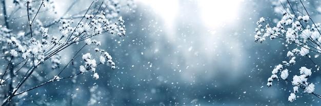 降雪時にぼやけた背景に植物の雪に覆われた枝と冬のパノラマ