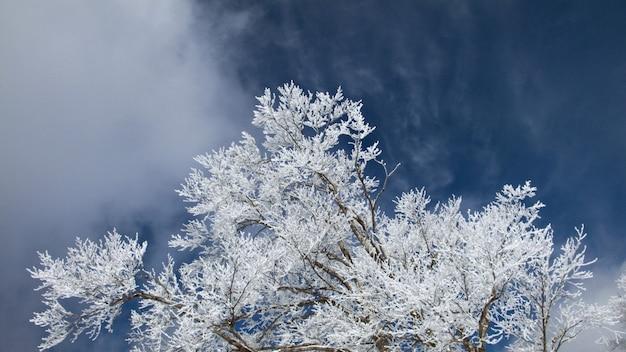 冷たい青い空、動く雲、つや消しの木の枝で冬のパノラマ写真