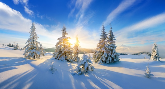 山々の冬のパノラマビュー。雪の中のモミの木。クリスマスのワンダーランドシーン