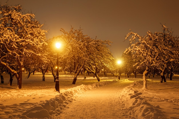 Winter park in the evening covered with snow with a included street lamps.