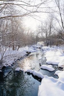 Зимний парк днем