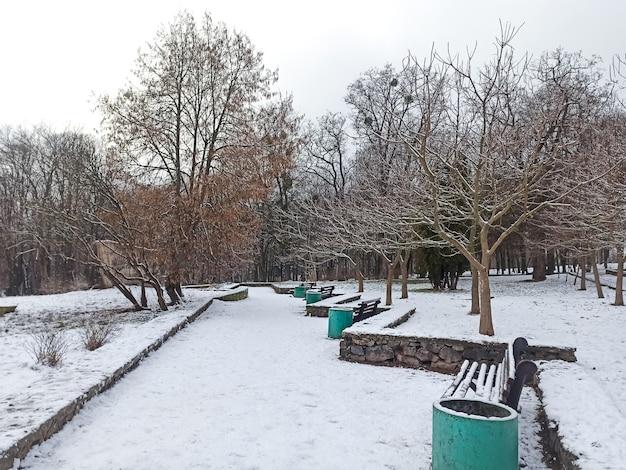 雪の中のウィンターパーク。裸の木。