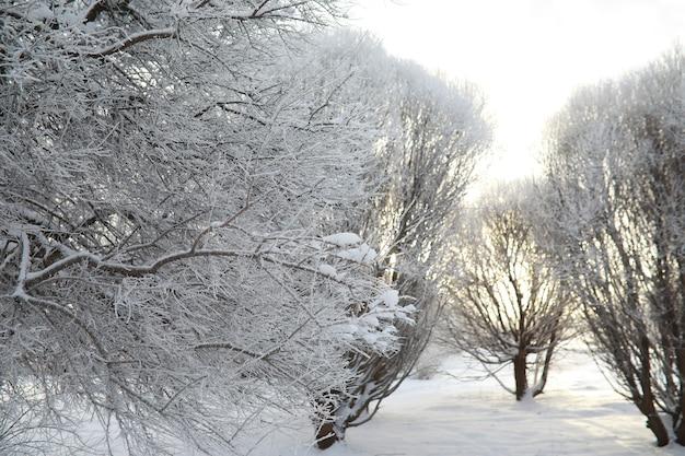 겨울공원. 눈 덮인 날씨의 풍경. 1월의 어느 날.