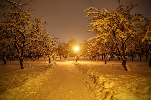 Winter park at night. snow covered trees.