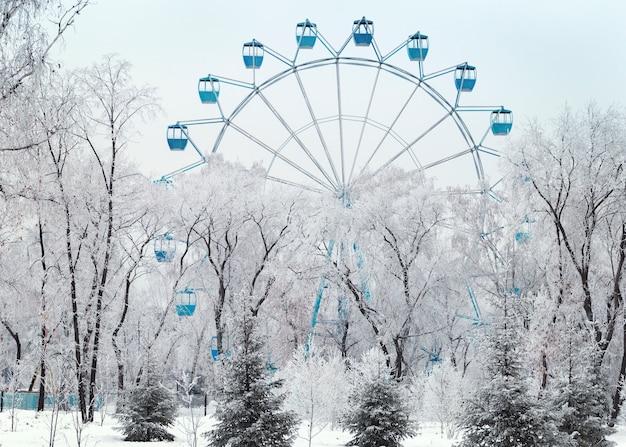 Winter park in siberia in russia. winter landscape.