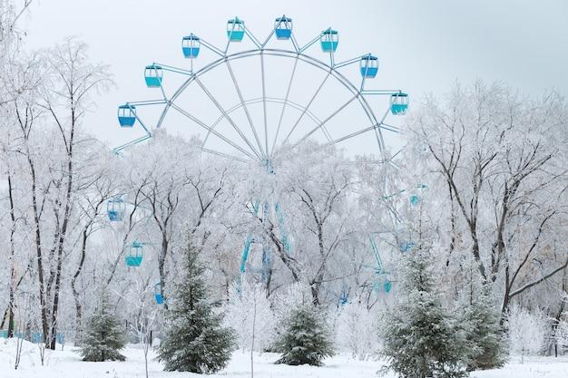Winter park. winter white trees.