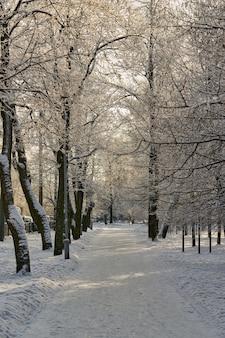 霜と雪に覆われた木々のあるウィンターパーク
