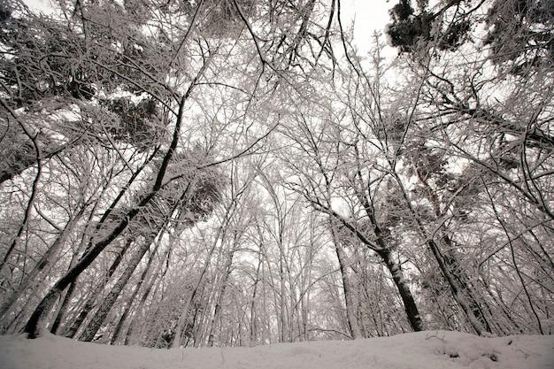 Зимний парк с деревьями без листвы, лес засыпан снегом зимой в мороз
