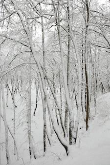 Зимний парк с деревьями без листвы