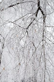 Winter pattern of tree branches covered with snow