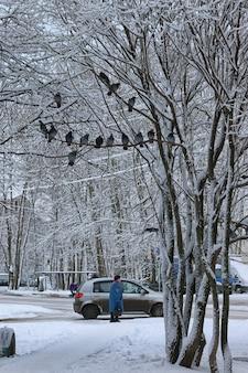 나무에 앉아 겨울 비둘기