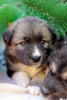 子犬の冬の肖像画