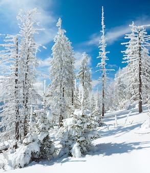 Зимний иней и заснеженные ели на склоне горы (карпаты, украина). два кадра сшивают изображение.