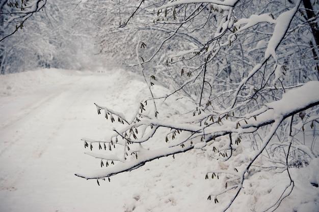 강설 후 겨울 길