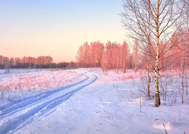 白樺の間の冬の道。雪の中の車の跡、夜明けのピンクの光の中の木々