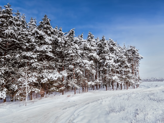 Winter road in the forest. trees in snow. aerial view.