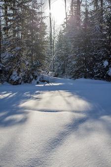 雪に覆われた森の中の冬の道道沿いの背の高い木々