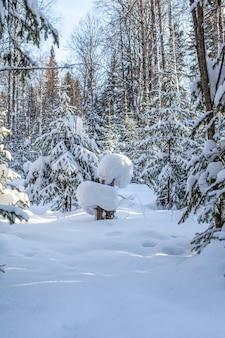 눈 덮인 숲에서 겨울 도로, 길을 따라 키가 큰 나무.