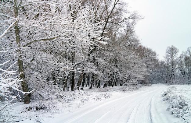 눈 덮인 숲에서 겨울도. 눈과 도로로 덮인 나무가 있는 하얀 겨울 풍경