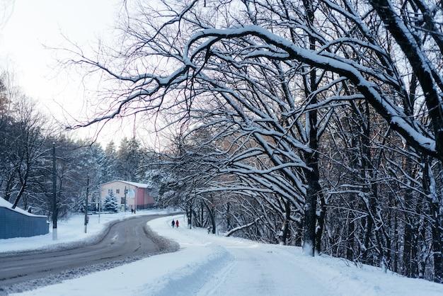 Зимняя дорога в городе с деревьями, покрытыми снегом