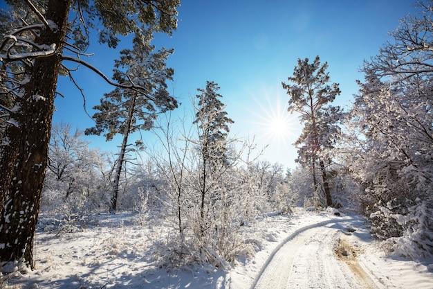 市内の冬の道