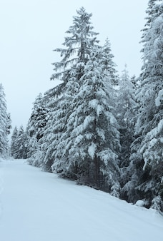 Winter road of pass with snowy trees (austria, tirol)